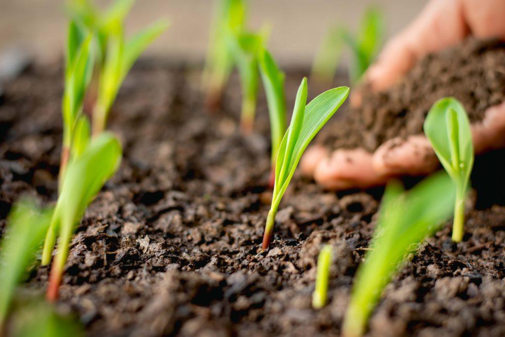 When-Do-Hemp-Seeds-Sprout-Kush-Marketplace
