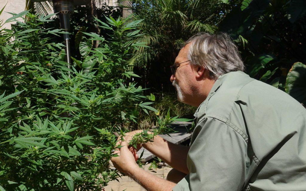 benefits-of-hemp-defoliation-kush-marketplace