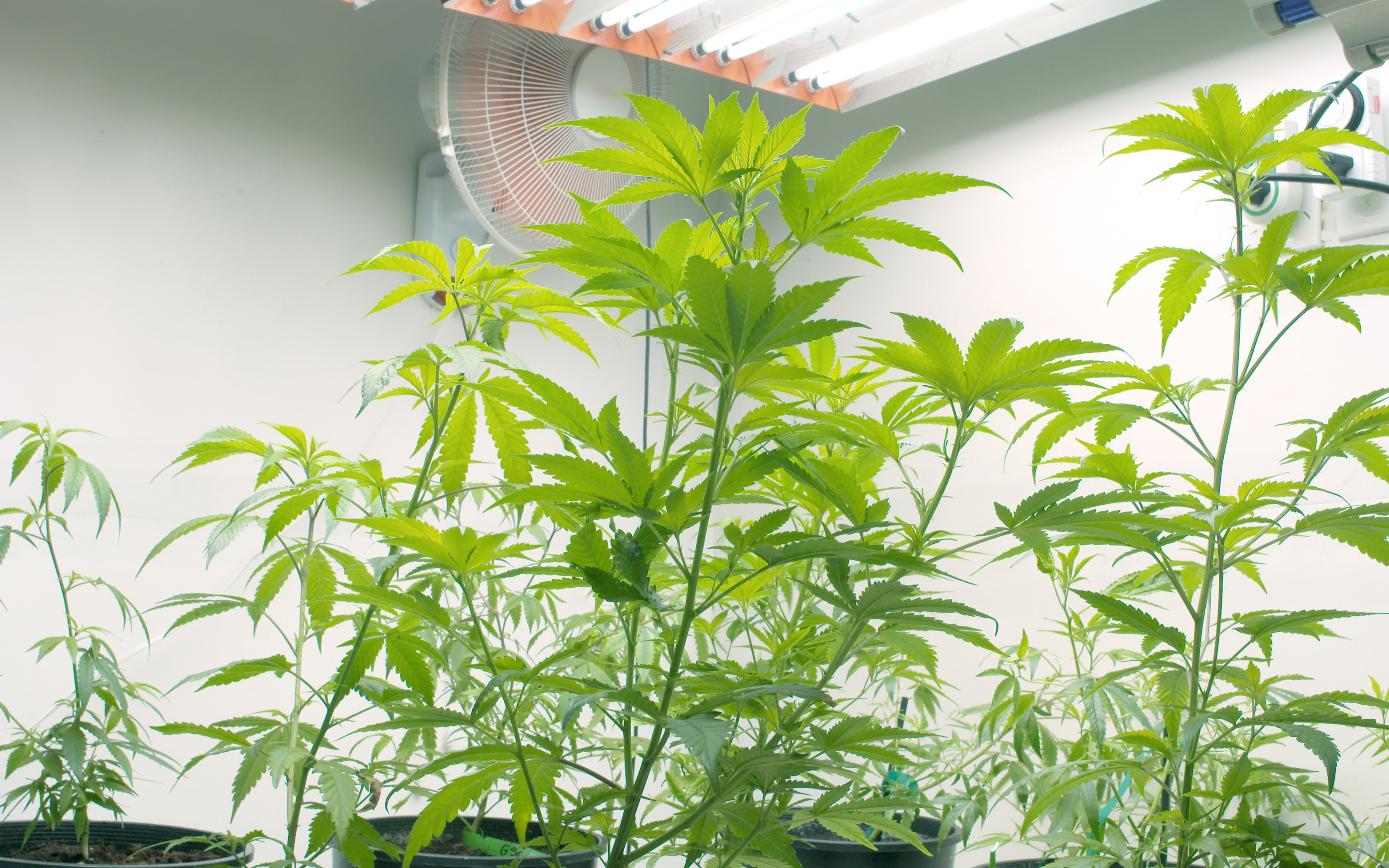 how to improve air circulation in your indoor cannabis grow room