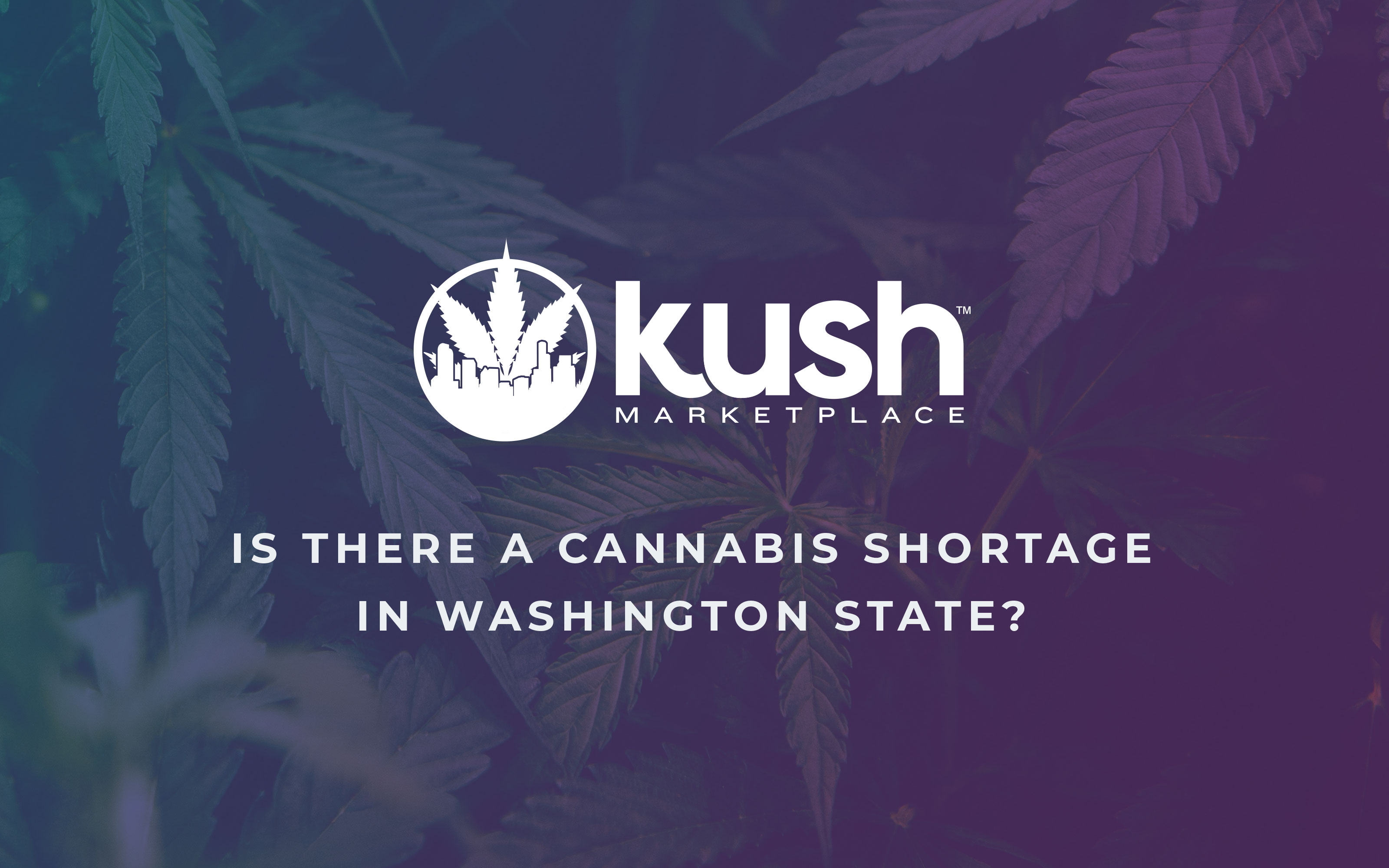 is-there-a-shortage-of-cannabis-in-washington-kush