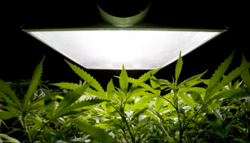 Autoflowering Seeds: 7 Things You Need to Know | Kush com