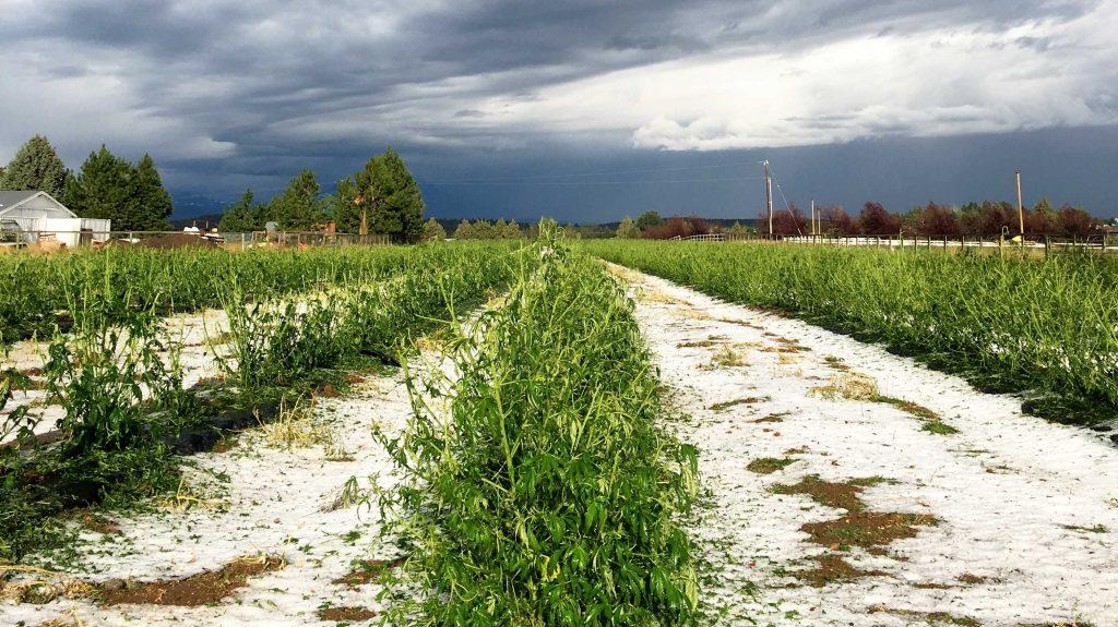 Kush com Blog | Get the Latest Hemp & Cannabis Industry News