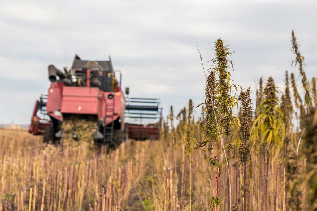 Kush com Blog   Get the Latest Hemp & Cannabis Industry News