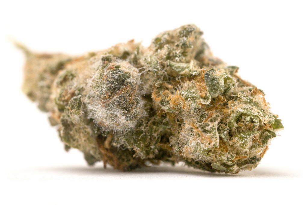How to Prevent Mold When Storing Cannabis or Hemp