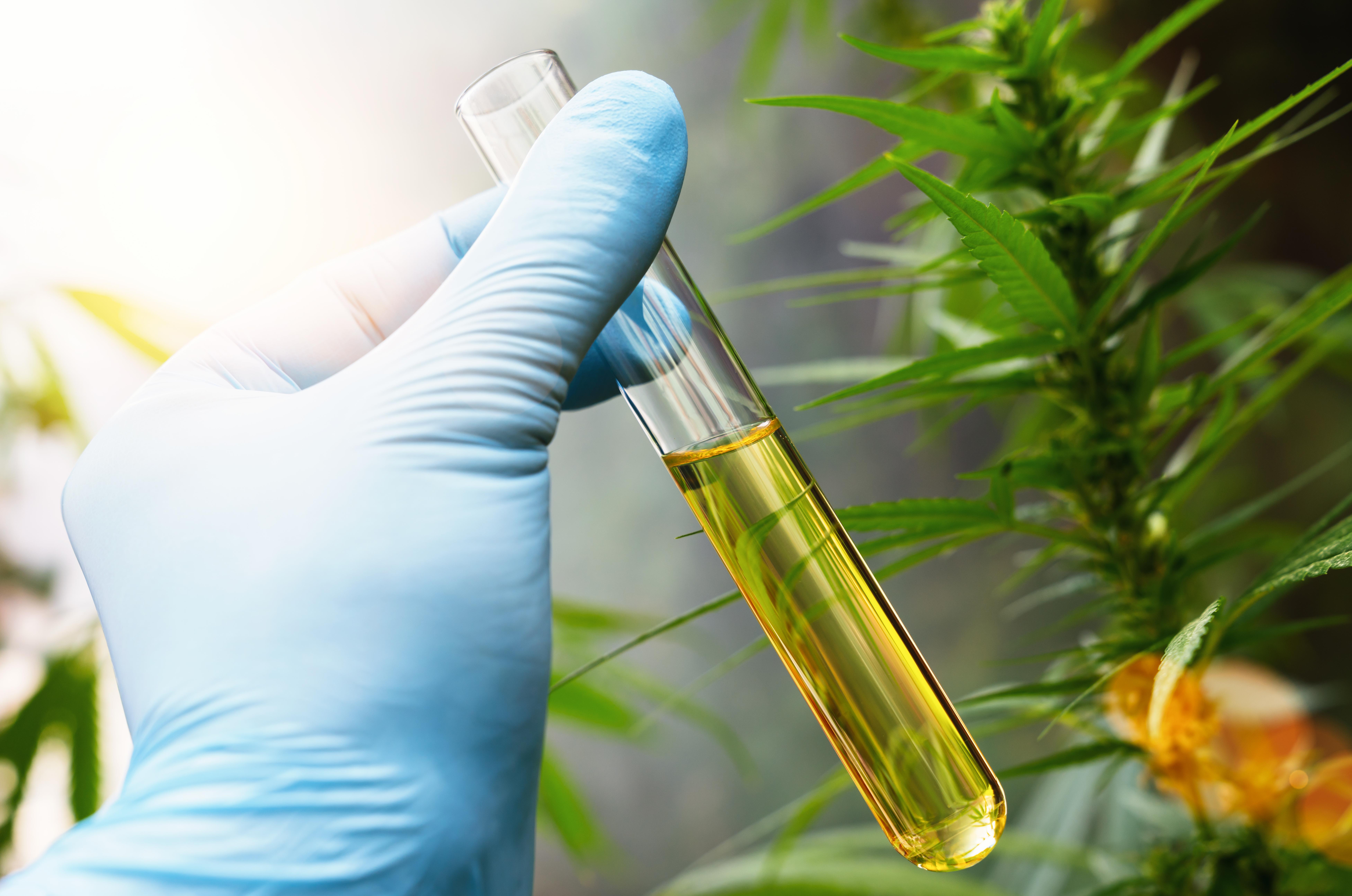 how to choose a hemp testing lab
